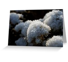 Frosty Bouquet Greeting Card