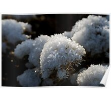 Frosty Bouquet Poster