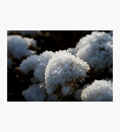 Frosty Bouquet Photographic Print