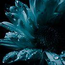 Frozen  by Sherstin Schwartz