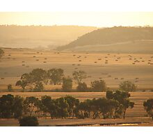 Summer in the Wheatbelt Photographic Print
