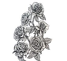 Roses in Pencil Photographic Print