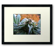 Purple Erdbeer 2 Framed Print