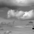 Storks and clouds by Richard McCaig