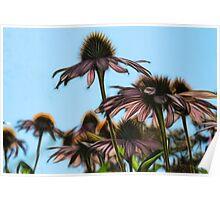 Parasols Of Echinacea  Poster