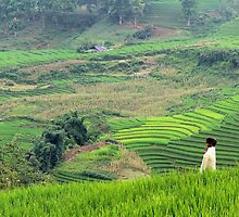 The Child in the Fields - Sa Pa, Vietnam. by Tiffany Lenoir