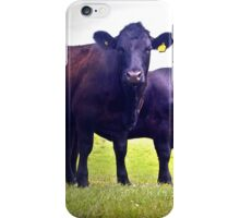 Cley Cows B iPhone Case/Skin