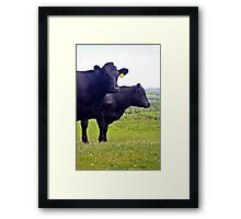 Cley Cows Too A Framed Print