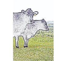 Cley Cows Too C Photographic Print