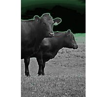 Cley Cows Too D Photographic Print