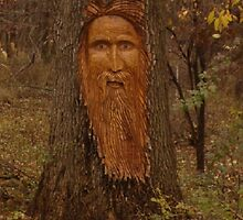 Old Man of the Forest by MChris
