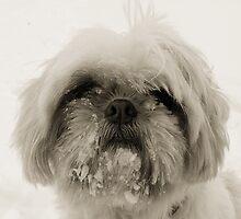 Snowy boy by jenylew