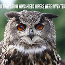 Eagle Owl by Jim Cumming
