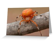 Marbled Orb Weaver Greeting Card