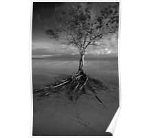 lone tree - Cape York. Poster