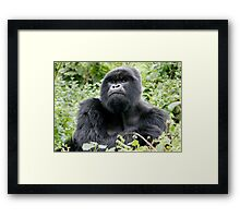 Dignified Framed Print