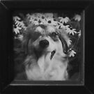 "I""ve been framed!! by Moninne Hardie"
