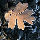 Frosty The Oak Leaf by Diane Schuster