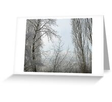 winter curtains Greeting Card