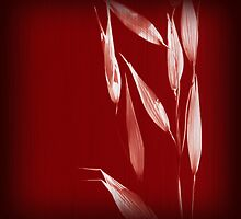 Grass Red 3 by Bianca Stanton