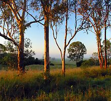 Dawn in the bush by Mel Brackstone