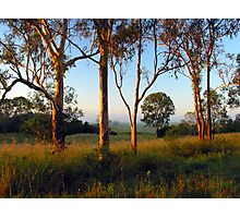 Dawn in the bush Photographic Print