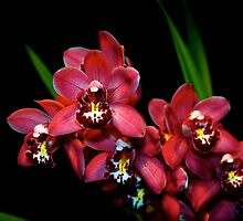 Teri's Orchid by Jeffrey  Sinnock