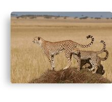 Cheetah Tails Canvas Print