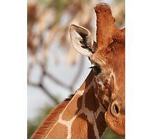 Giraffe Photographic Print