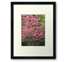 dogwood spring Framed Print