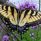 butterfly by paula whatley