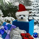 Hermes the Maltese - Boo ! by Morag Bates