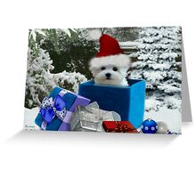Hermes the Maltese - Boo ! Greeting Card