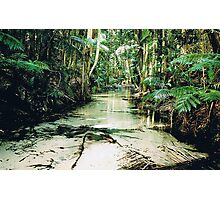 Central Station, Fraser Island Photographic Print