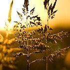 Golden haze - closeup by Mike Emmett