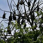 Bats by day  by chrisblackwell29