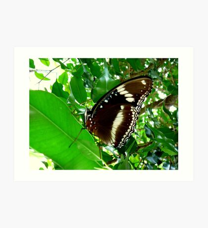 GREEN ATTRACTING SO MANY INSECTS. Art Print