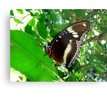 GREEN ATTRACTING SO MANY INSECTS. Metal Print
