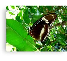 GREEN ATTRACTING SO MANY INSECTS. Canvas Print