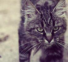 Walking cat  by Marie Charrois