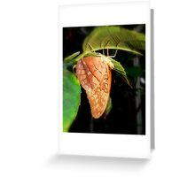 Brown Soldier Butterfly Greeting Card