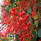 Beautiful Flame Tree in my Garden by MardiGCalero