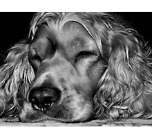Sleepy,,,sleepy Photographic Print