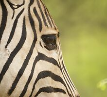 Stripy's Eye by Wazi