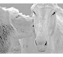 animal lovers Photographic Print
