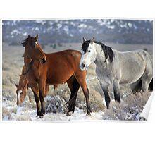 Snow Mustangs Poster
