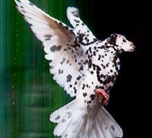 Birdog by lozmar