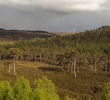 Glen Affric Evening Panorama by PigleT