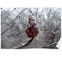 Frozen Sumac Poster