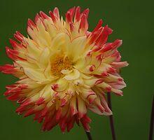 Flower by PCDC